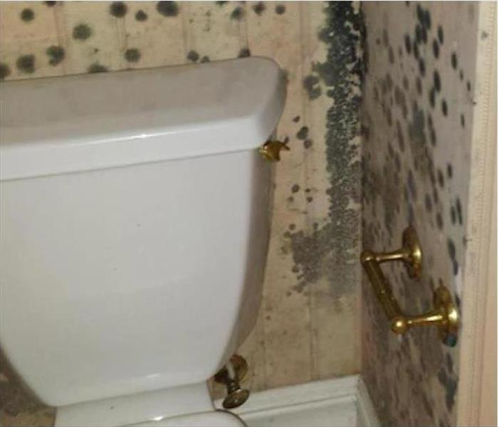 Mold in a Naples Powder Room