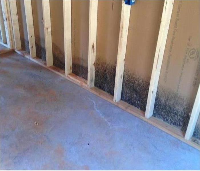 Mold Damage – Naples Garage