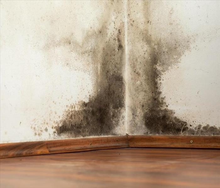 Mold Remediation Professional Mold Damage Removal and Remediation Restores and Protects Your Naples Area Home
