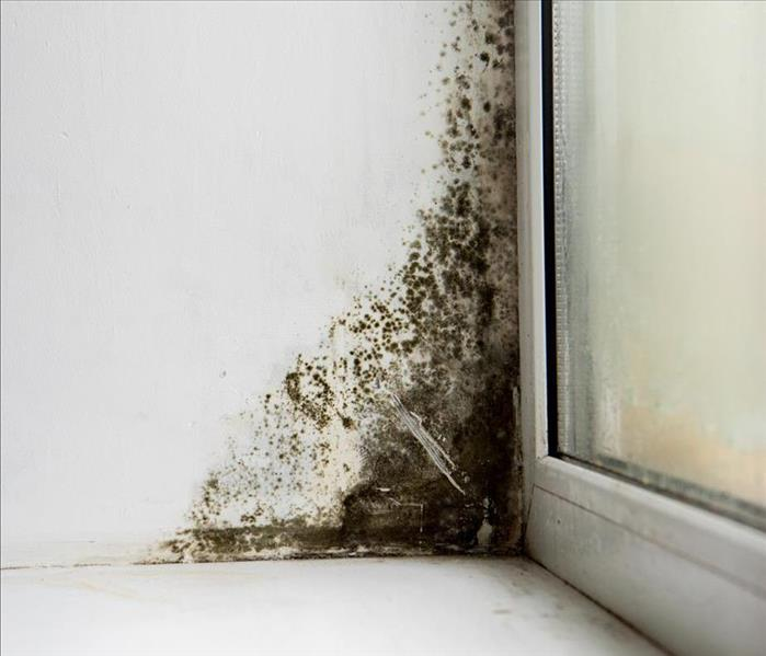 Mold Remediation Naples Mold Damage