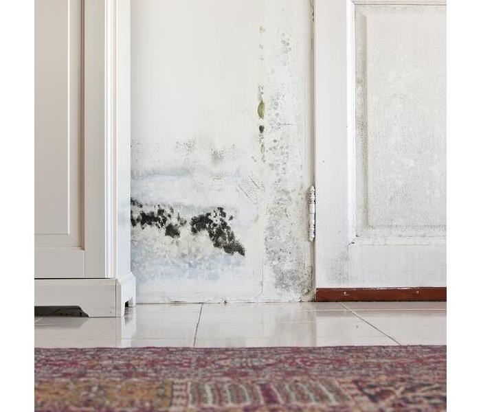 Mold Remediation Mold Damage Can Hit Your Naples Home Even if You Did Everything Right