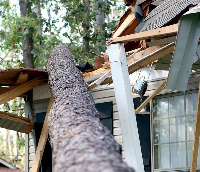 Storm Damage Fallen Trees Can Allow Flooding of Your Naples House