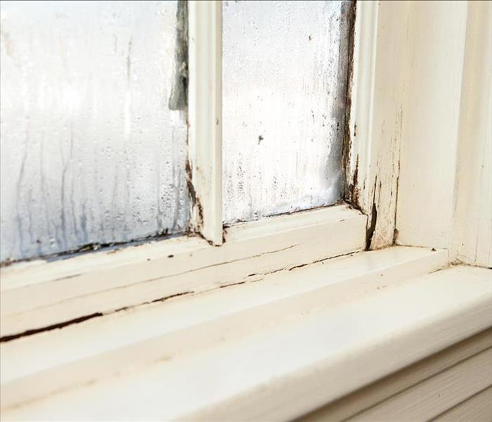 An Answer To Common Mold Damage Issues In And Around Your